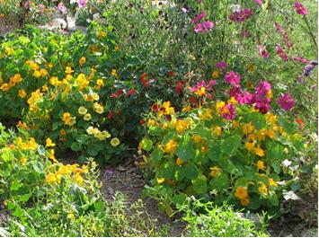 Jardiner a ecol gica salud h bitat conciencia for Jardineria ecologica