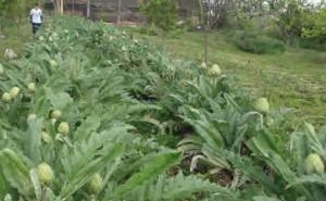 La agricultura ecológica podría alimentar a toda la población mundial