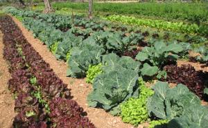 Agricultura ecológica, la agricultura más lógica