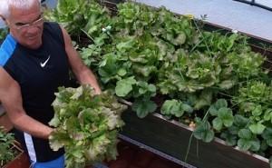 El Huerto Ecológico:  Cultiva tu salud y la del planeta