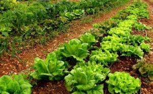 'Los alimentos ecológicos son más nutritivos'