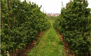 La agricultura ecológica, clave para alimentar a la población mundial de forma sostenible